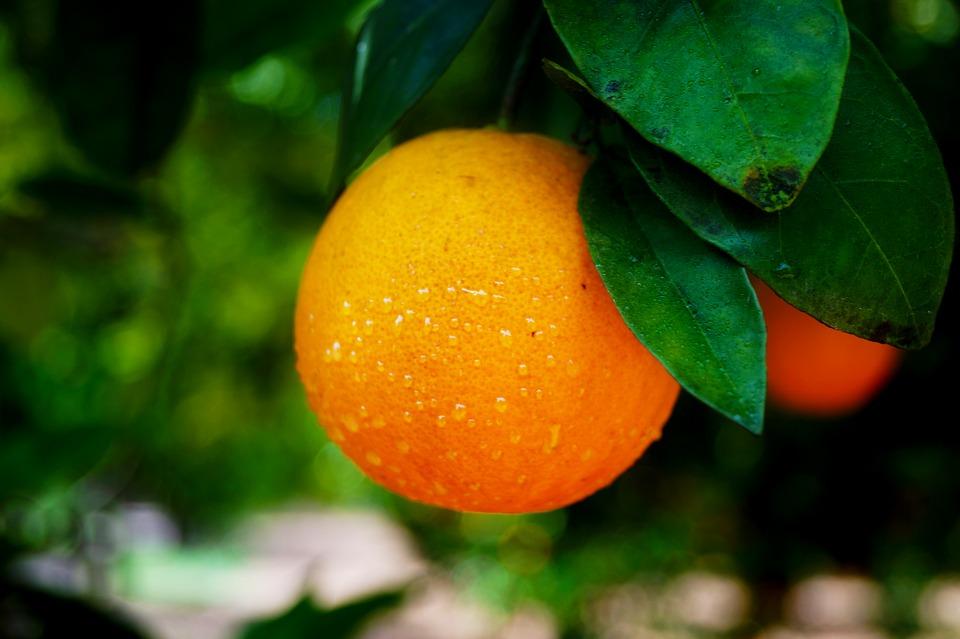orange-2316667_960_720
