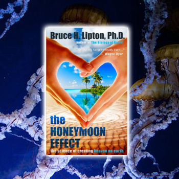 Shop Law of Attraction The Honey Moon Effect Bruce Lipton